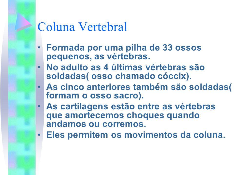 Coluna Vertebral Formada por uma pilha de 33 ossos pequenos, as vértebras. No adulto as 4 últimas vértebras são soldadas( osso chamado cóccix). As cin