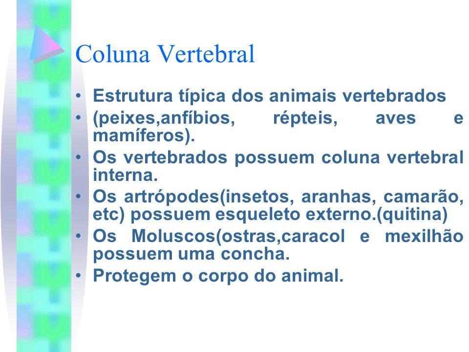 Coluna Vertebral Estrutura típica dos animais vertebrados (peixes,anfíbios, répteis, aves e mamíferos). Os vertebrados possuem coluna vertebral intern