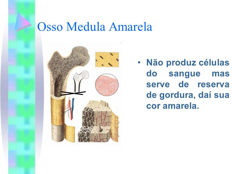 Matriz Óssea Ao redor das células dos ossos, formada por sais minerais- principalmente fosfato e cálcio e fibras de colágeno, a proteína encontrada também na derme.