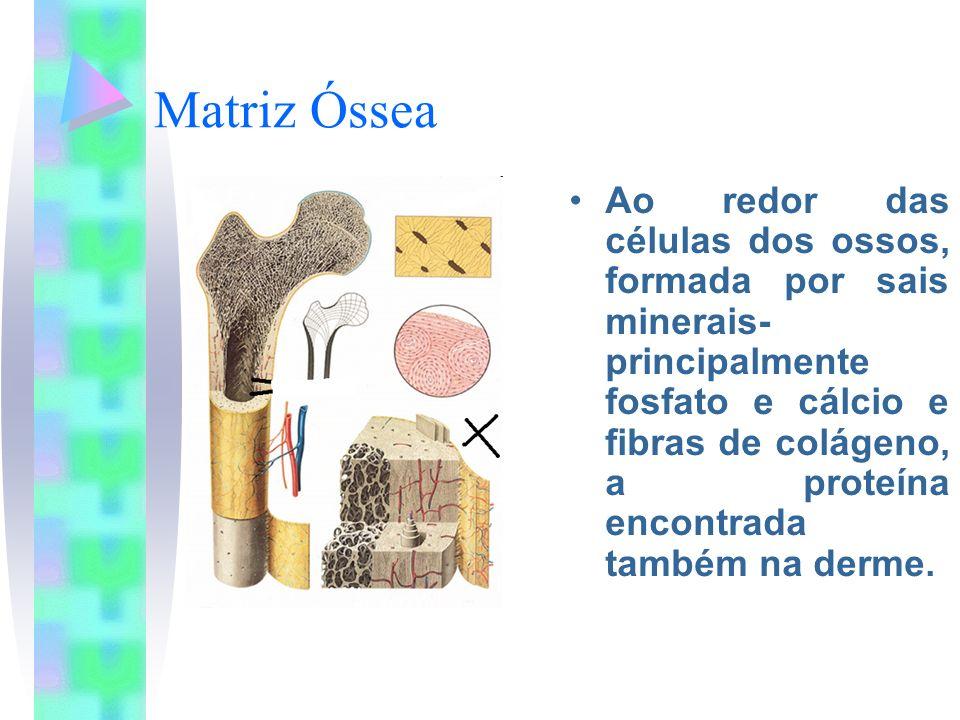 Matriz Óssea Ao redor das células dos ossos, formada por sais minerais- principalmente fosfato e cálcio e fibras de colágeno, a proteína encontrada ta