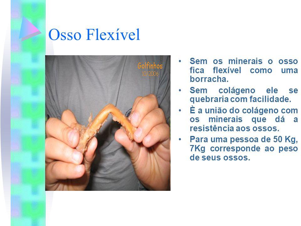 Osso Flexível Sem os minerais o osso fica flexível como uma borracha. Sem colágeno ele se quebraria com facilidade. È a união do colágeno com os miner