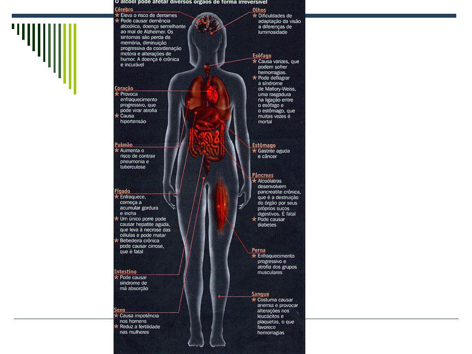 Efeitos do Álcool Afeta a visão e a fala A coordenação motora e perda de consciência