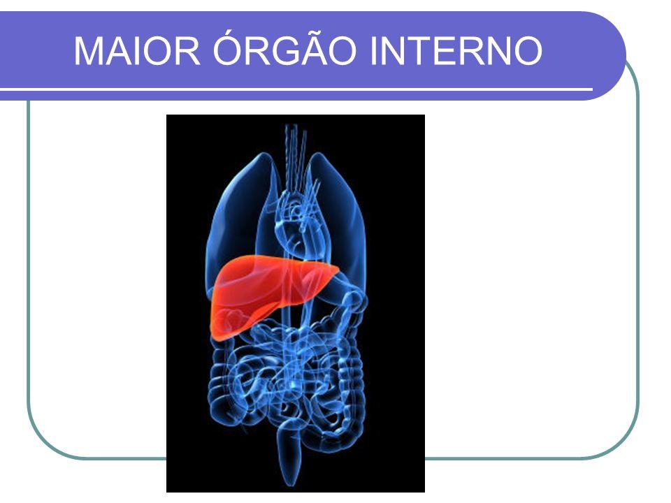 MAIOR ÓRGÃO INTERNO