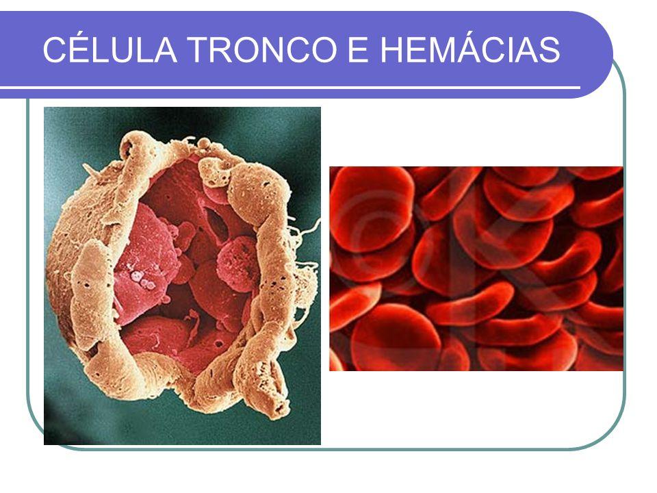 CÉLULA TRONCO E HEMÁCIAS