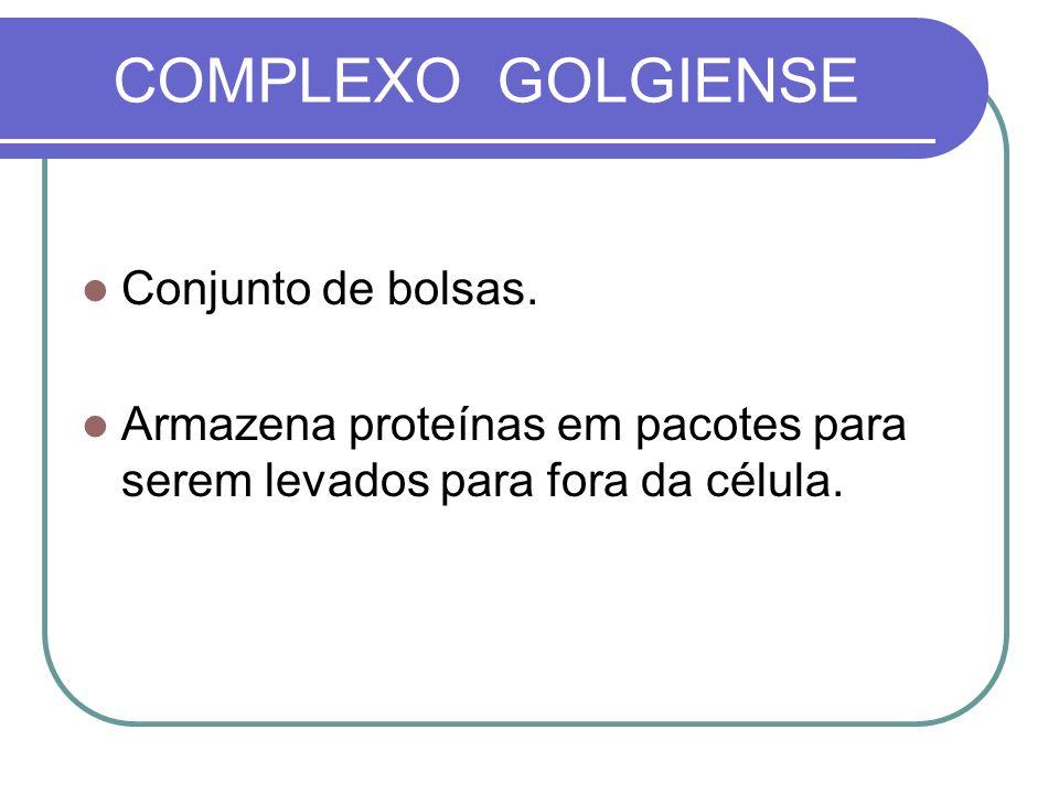 COMPLEXO GOLGIENSE Conjunto de bolsas. Armazena proteínas em pacotes para serem levados para fora da célula.