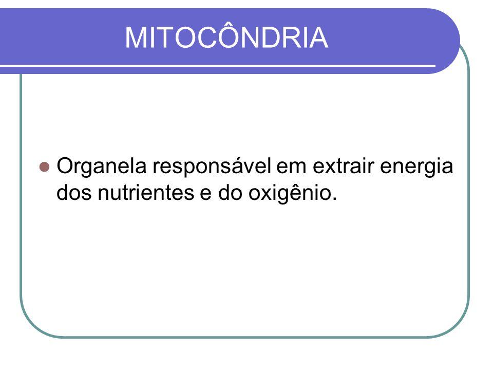 MITOCÔNDRIA Organela responsável em extrair energia dos nutrientes e do oxigênio.