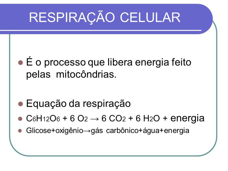 RESPIRAÇÃO CELULAR É o processo que libera energia feito pelas mitocôndrias. Equação da respiração C 6 H 12 O 6 + 6 O 2 6 CO 2 + 6 H 2 O + energia Gli
