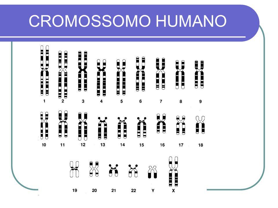 CROMOSSOMO HUMANO