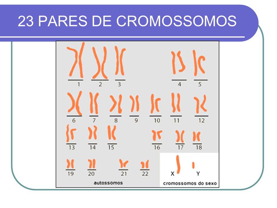 23 PARES DE CROMOSSOMOS