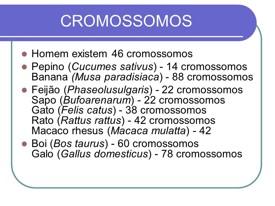 CROMOSSOMOS Homem existem 46 cromossomos Pepino (Cucumes sativus) - 14 cromossomos Banana (Musa paradisiaca) - 88 cromossomos Feijão (Phaseolusulgaris