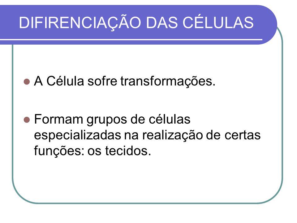 DIFIRENCIAÇÃO DAS CÉLULAS A Célula sofre transformações. Formam grupos de células especializadas na realização de certas funções: os tecidos.