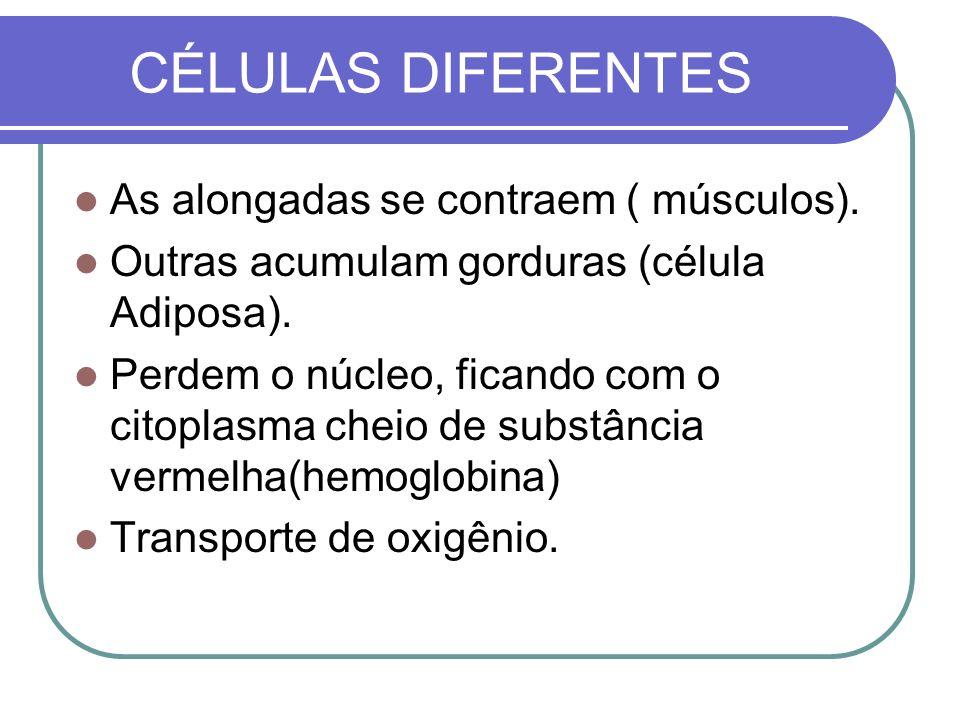 CÉLULAS DIFERENTES As alongadas se contraem ( músculos). Outras acumulam gorduras (célula Adiposa). Perdem o núcleo, ficando com o citoplasma cheio de