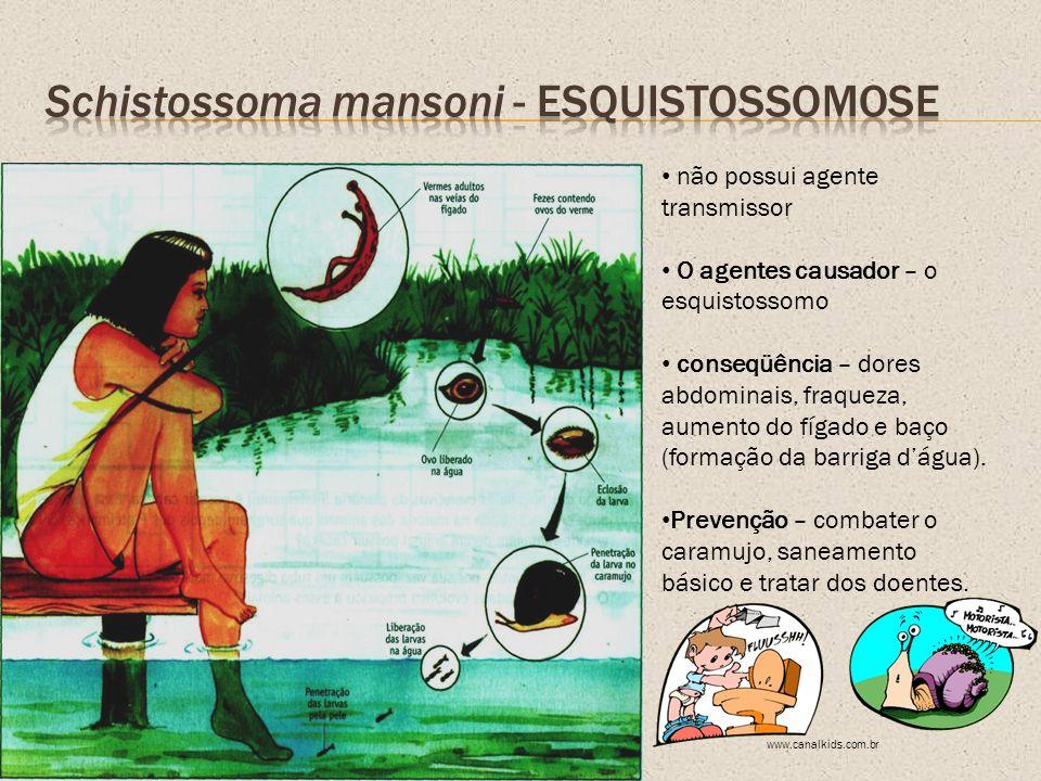 não possui agente transmissor O agentes causador – o esquistossomo conseqüência – dores abdominais, fraqueza, aumento do fígado e baço (formação da ba