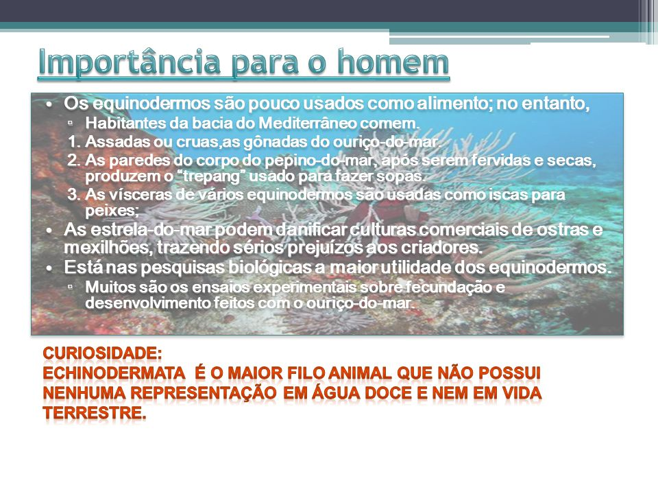 http://educar.sc.usp.br/licenciatura/2000/equino/classificacao.htm http://www.brasilescola.com/biologia/equinodermos.htm http://www.animalshow.hpg.ig.com.br/equinod.htm http://www.portalbrasil.net/educacao_seresvivos_invertebrados_equinodermos.htm http://www2.uol.com.br/JC/sites/kids/fiquepor_bob_esponja2.htm (esse site é muito legalzinho!!!) http://www2.uol.com.br/JC/sites/kids/fiquepor_bob_esponja2.htm