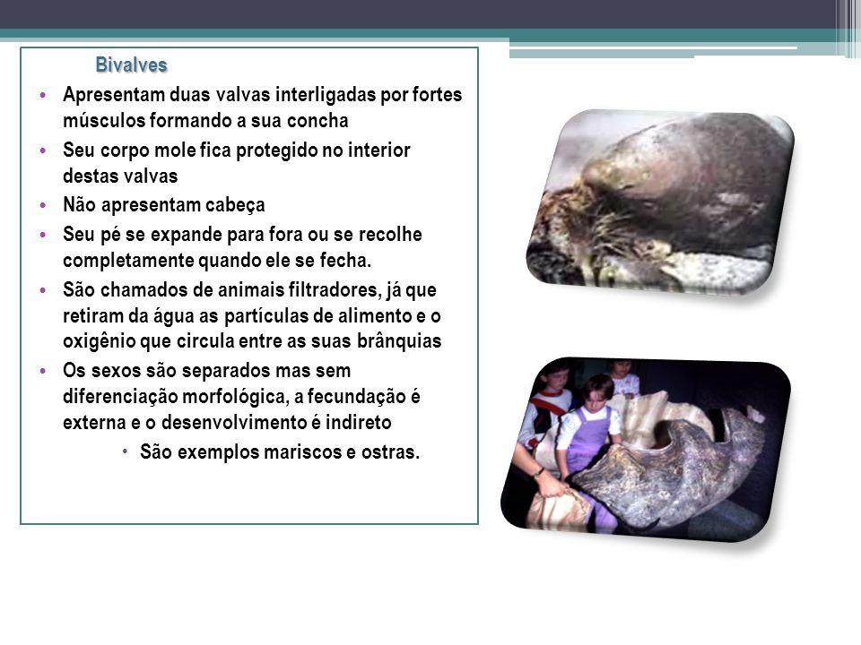 Gastrópodes Apresentam uma única concha Corpo é mole Mas apresenta uma forte musculatura que o ajuda a se locomover. Seu sistema digestório é bem dese