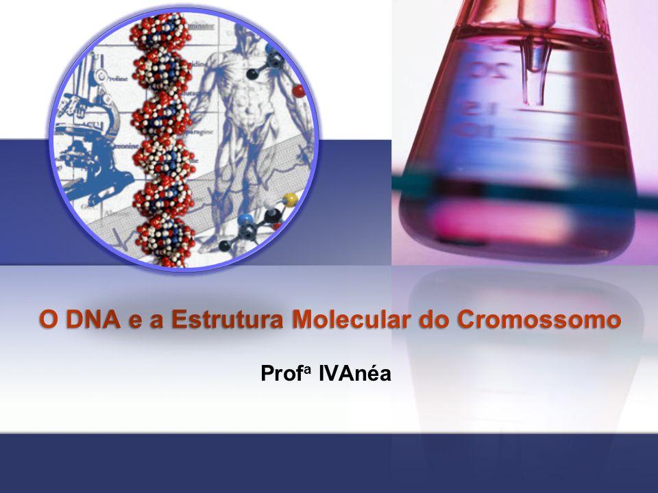 O DNA e a Estrutura Molecular do Cromossomo Prof a IVAnéa