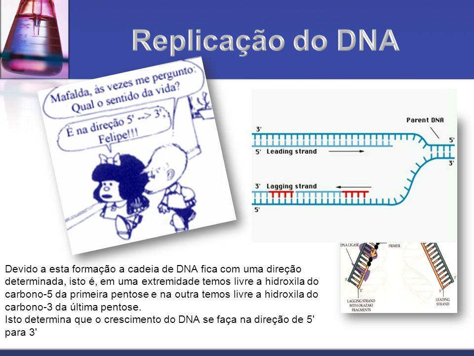 Devido a esta formação a cadeia de DNA fica com uma direção determinada, isto é, em uma extremidade temos livre a hidroxila do carbono-5 da primeira p