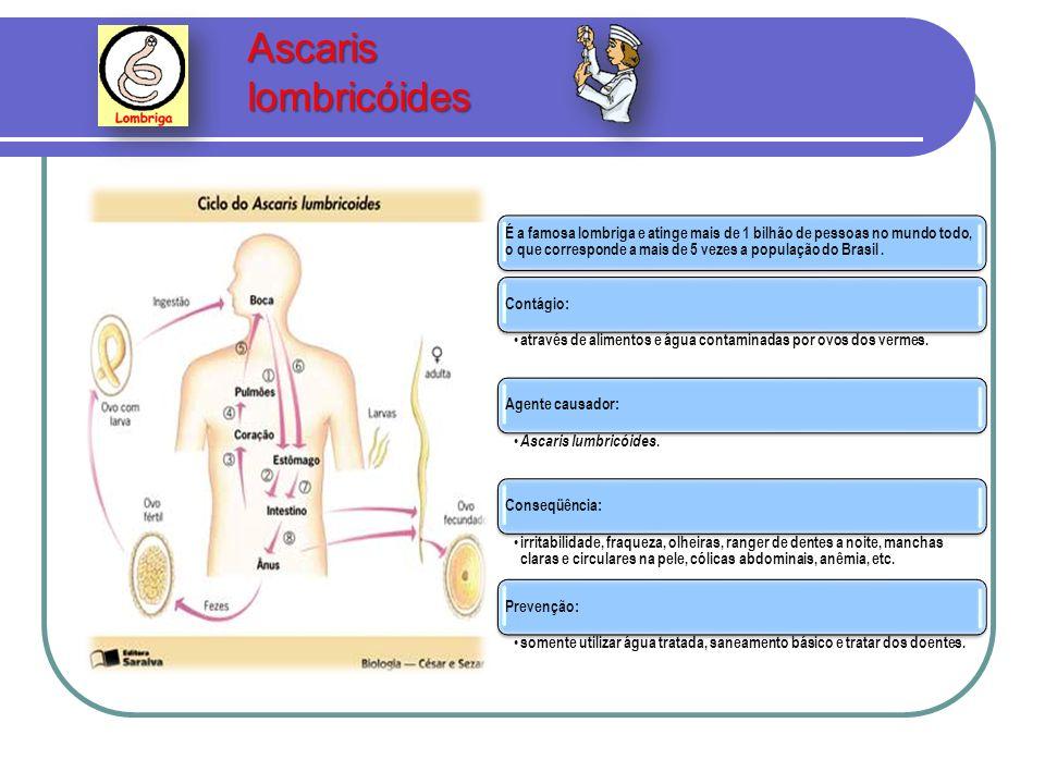 Ascaris lombricóides Ascaris lombricóides É a famosa lombriga e atinge mais de 1 bilhão de pessoas no mundo todo, o que corresponde a mais de 5 vezes