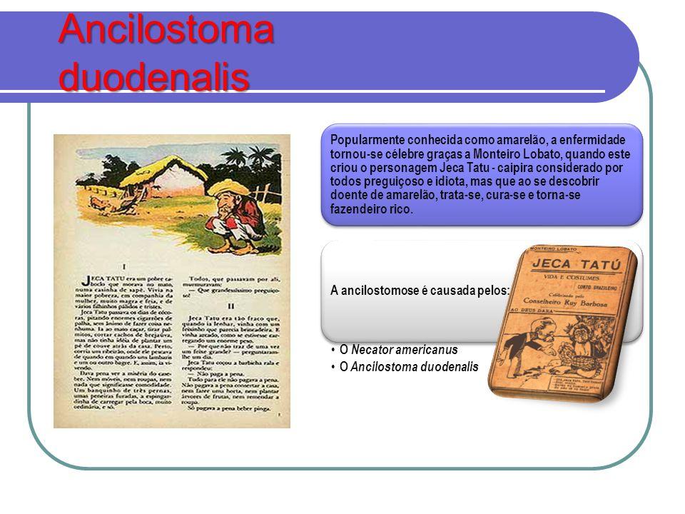 Ancilostoma duodenalis Popularmente conhecida como amarelão, a enfermidade tornou-se célebre graças a Monteiro Lobato, quando este criou o personagem