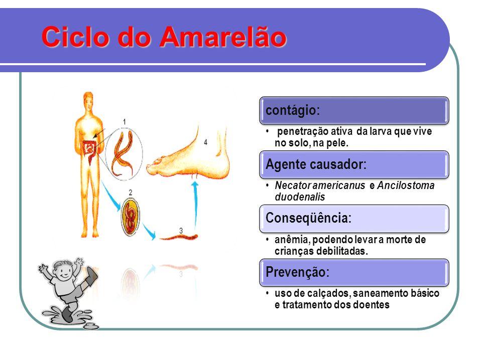 http://www.ibb.unesp.br/departamentos/Educacao/Trabalhos/obichoqu emedeu/helminto_ancilostomose.htm http://www.ibb.unesp.br/departamentos/Educacao/Trabalhos/obichoqu emedeu/helminto_ancilostomose.htm http://www.arscientia.com.br/materia/ver_materia.php?id_materia=156 http://cienciahoje.uol.com.br/4219
