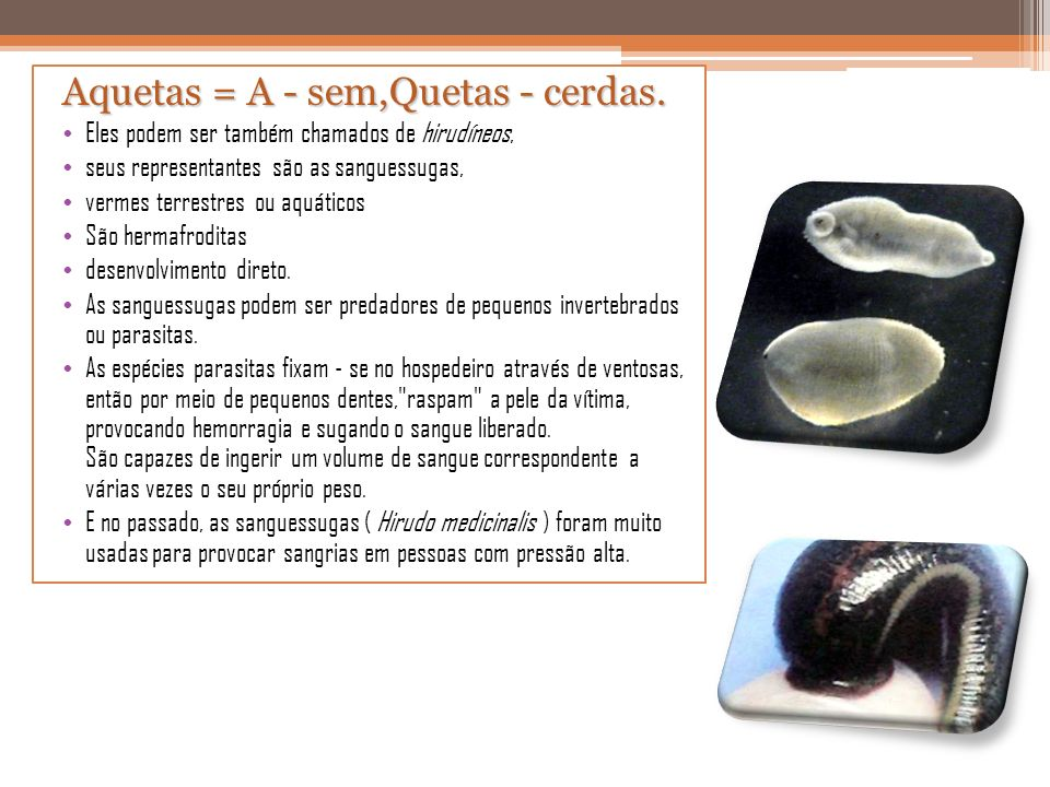 Aquetas = A - sem,Quetas - cerdas. Eles podem ser também chamados de hirudíneos, seus representantes são as sanguessugas, vermes terrestres ou aquátic