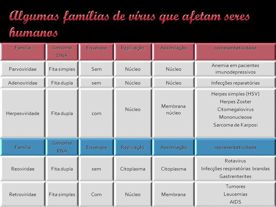 FamíliaGenomaDNAEnvelopeReplicaçãoAssimilaçãorepresentatividade ParvoviridaeFita simplesSemNúcleo Anemia em pacientes imunodepressivos AdenoviridaeFita duplasemNúcleo Infecções reparatórias HerpesviridadeFita duplacom Núcleo Membrana núcleo Herpes simples (HSV) Herpes Zoster Citomegalovirus Mononucleose Sarcoma de Karposi FamíliaGenomaRNAEnvelopeReplicaçãoAssimilaçãorepresentatividade ReoviridaeFita duplasemCitoplasma Rotavirus Infecções respiratórias brandas Gastrenterites RetroviridaeFita simplesComNúcleoMembrana Tumores Leucemias AIDS