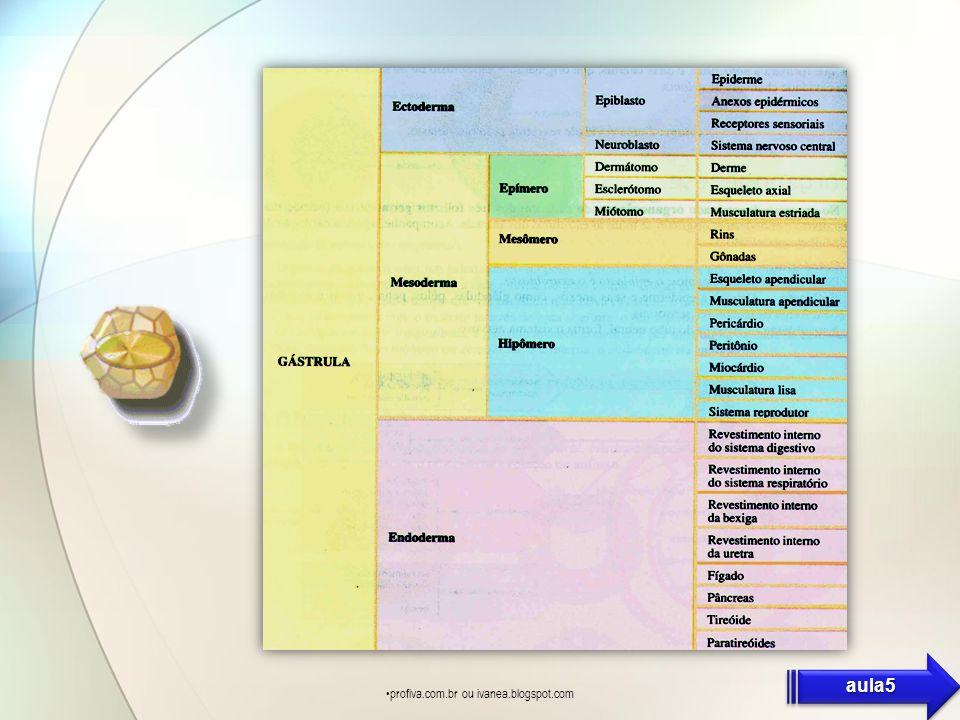 profiva.com.br ou ivanea.blogspot.com aula5