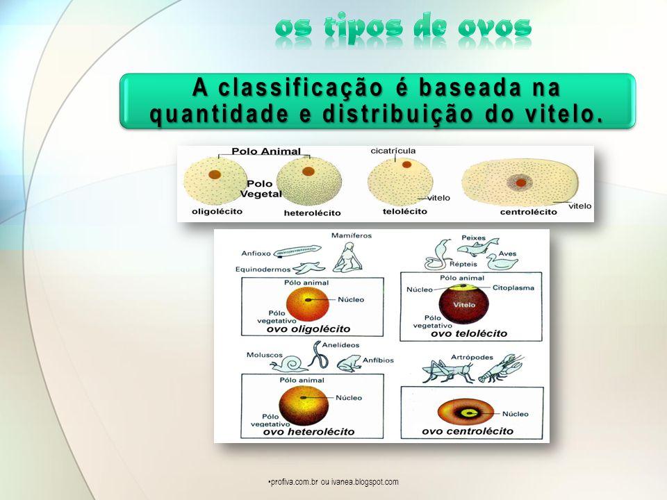 A classificação é baseada na quantidade e distribuição do vitelo. profiva.com.br ou ivanea.blogspot.com