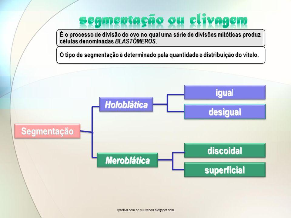 É o processo de divisão do ovo no qual uma série de divisões mitóticas produz células denominadas BLASTÔMEROS. O tipo de segmentação é determinado pel