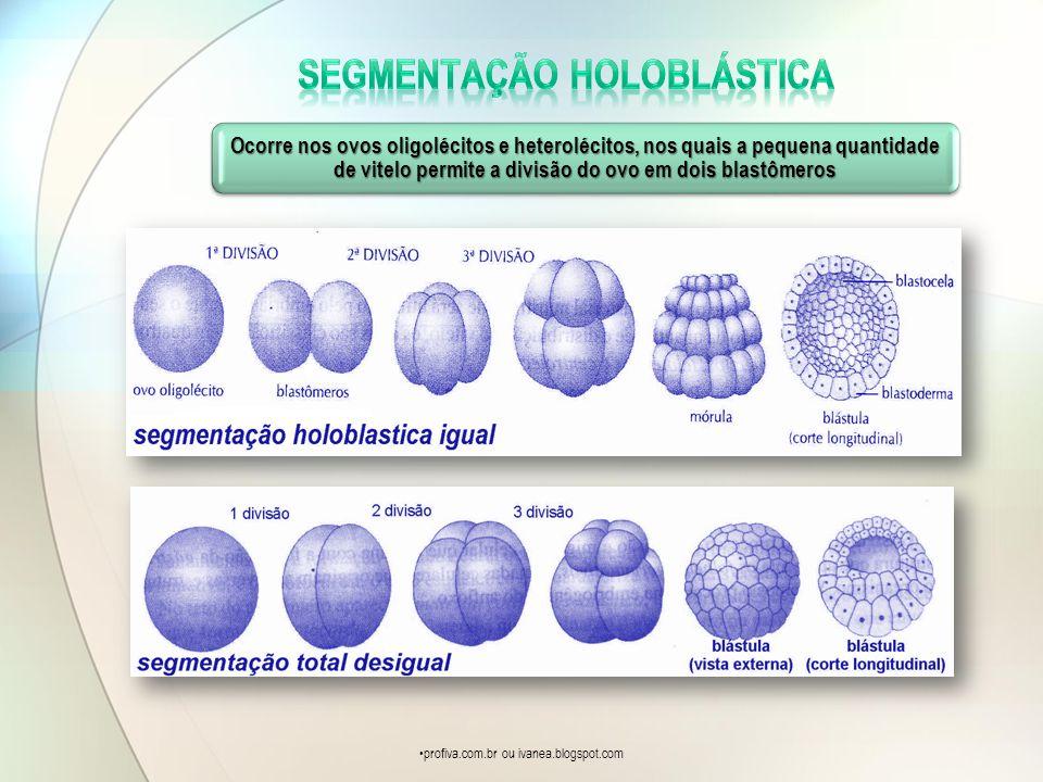 Ocorre nos ovos oligolécitos e heterolécitos, nos quais a pequena quantidade de vitelo permite a divisão do ovo em dois blastômeros profiva.com.br ou