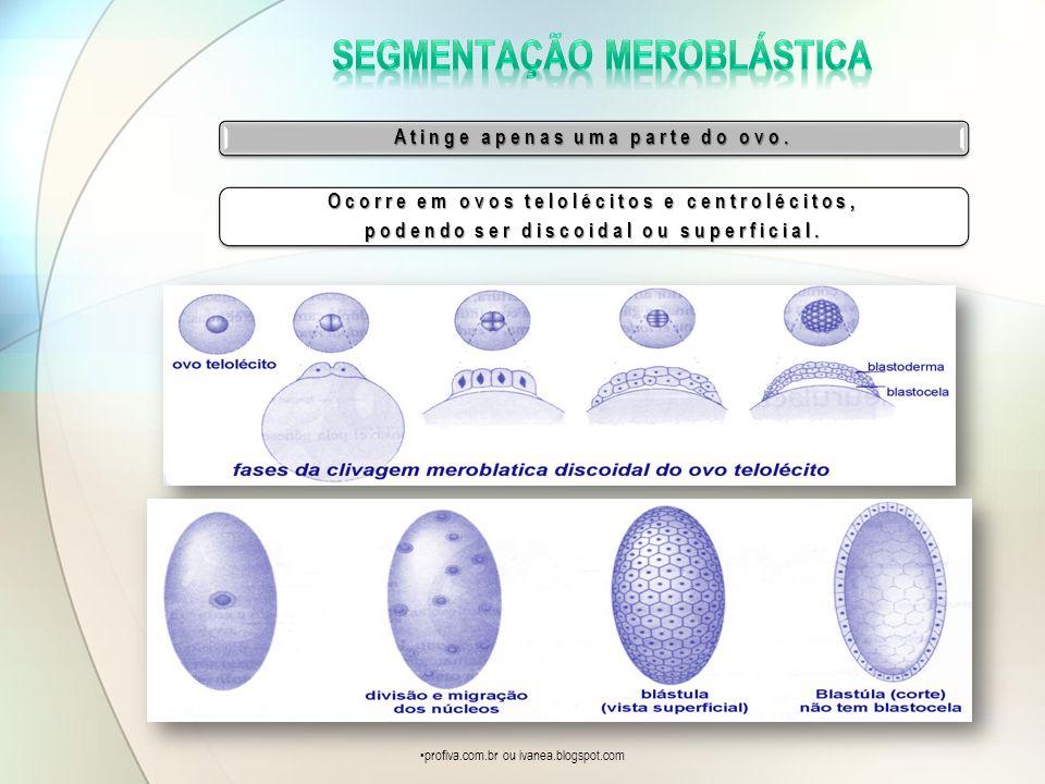 Atinge apenas uma parte do ovo. Ocorre em ovos telolécitos e centrolécitos, podendo ser discoidal ou superficial. profiva.com.br ou ivanea.blogspot.co