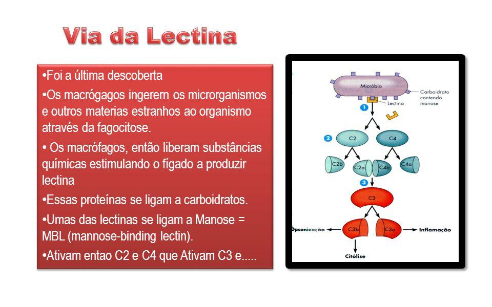 Dediciência de C1, C2 ou C4 – causam distúrbios vascularesdo colágeno que resultam em hipersensibilidade (anafilaxia) Deficiência de C3,embora rara – aumenta a sucetibilidade de infecções recorrentes com microrganismos piogênicos (Microrganismo com capacidade de provocar infecção purulenta).
