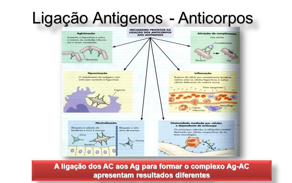 Ligação Antigenos - Anticorpos A ligação dos AC aos Ag para formar o complexo Ag-AC apresentam resultados diferentes