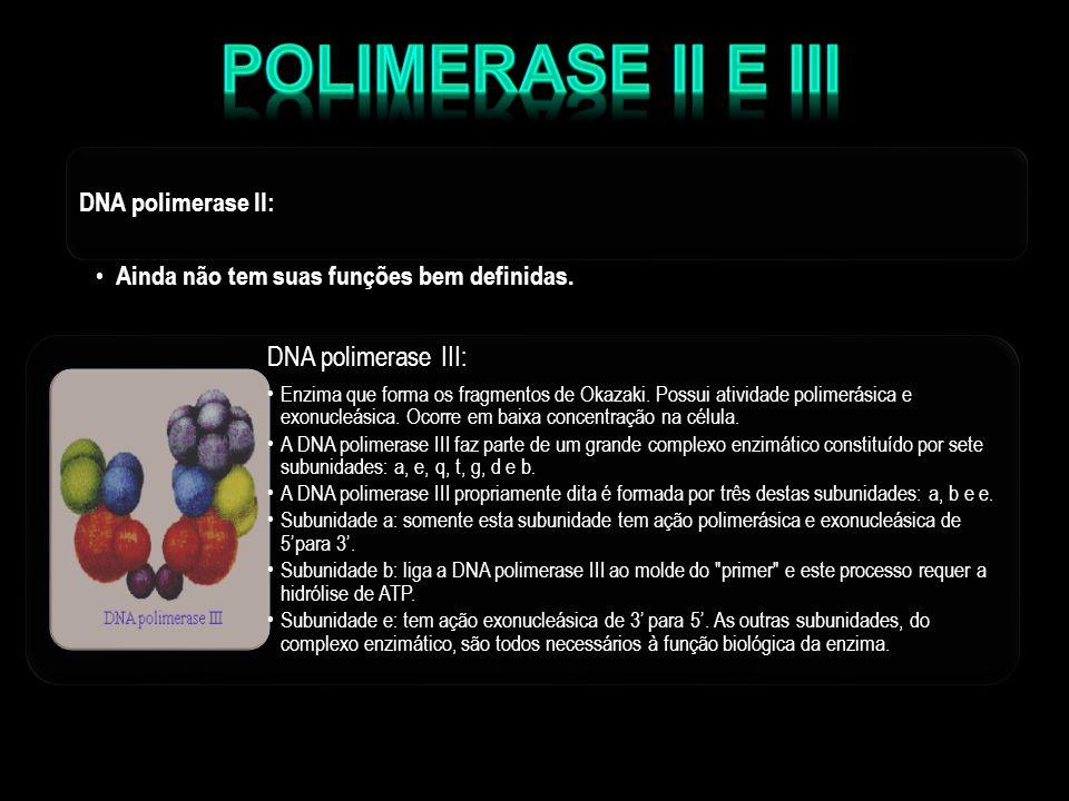 DNA polimerase II: Ainda não tem suas funções bem definidas. Ainda não tem suas funções bem definidas. DNA polimerase III: Enzima que forma os fragmen