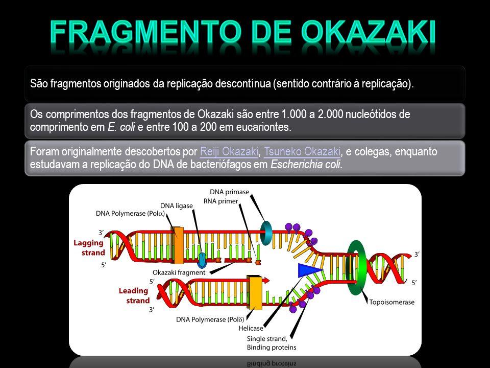 São fragmentos originados da replicação descontínua (sentido contrário à replicação). Os comprimentos dos fragmentos de Okazaki são entre 1.000 a 2.00