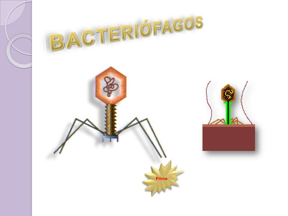 O vírus se reproduz usando o DNA da célula hospedeira.