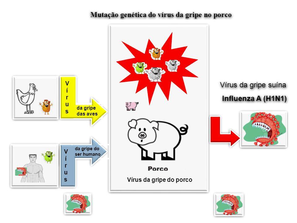 VírusVírus VírusVírus da gripe das aves VírusVírus VírusVírus da gripe do ser humano Vírus da gripe do porco Mutação genética do vírus da gripe no por