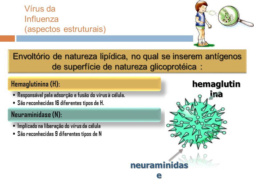 neuraminidas e hemaglutin ina Vírus da Influenza (aspectos estruturais)