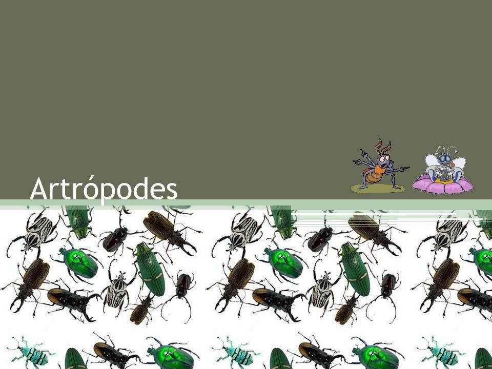 Os artrópodes agrupam mais de 800 mil espécies, quantia que supera todos os demais filos reunidos.