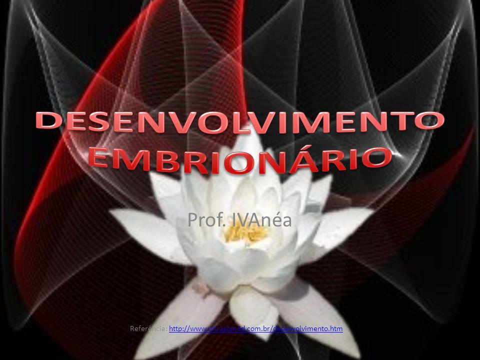 Desenvolvimento embrionário - fertilização até a sexta semana e anatomia reprodutiva feminina.