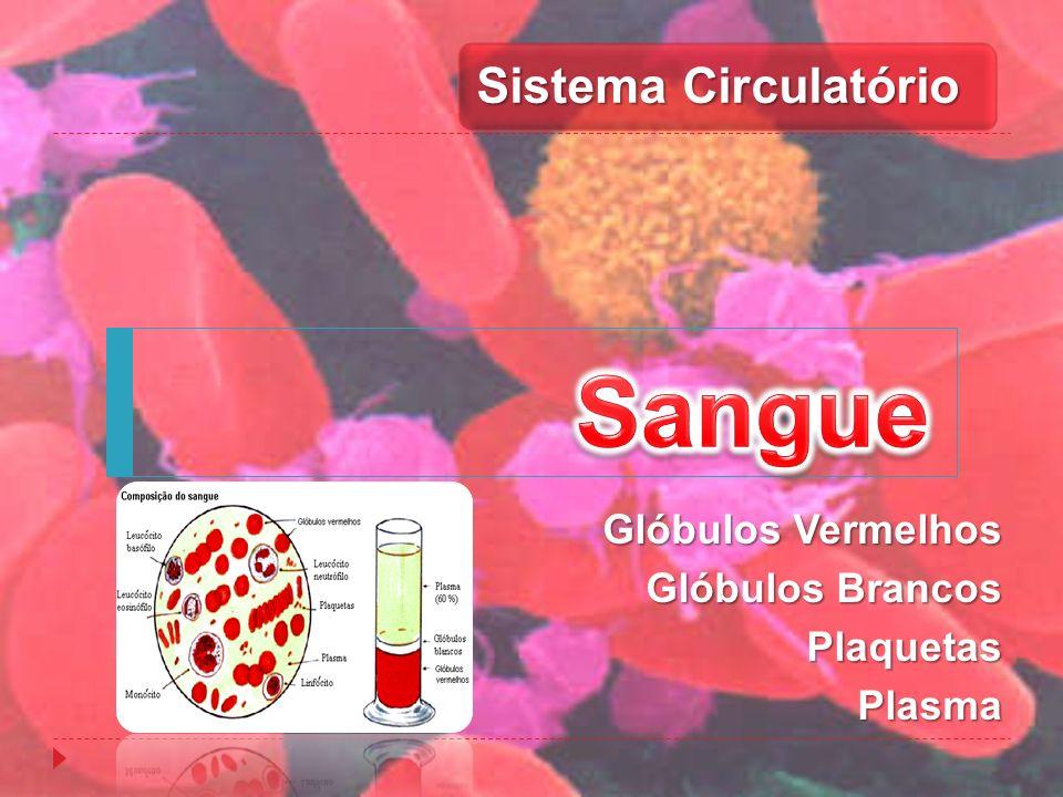 Glóbulos Vermelhos Glóbulos Brancos PlaquetasPlasma Sistema Circulatório