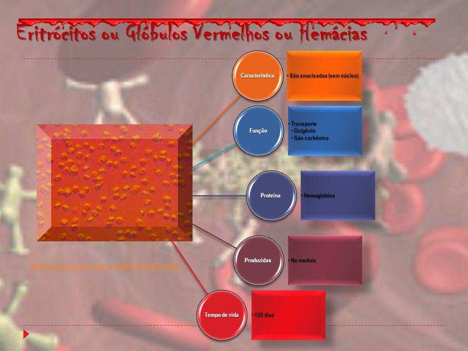 Eritrócitos ou Glóbulos Vermelhos ou Hemácias Característica São anucleadas (sem núcleo) São anucleadas (sem núcleo)Função Transporte Transporte Oxigê