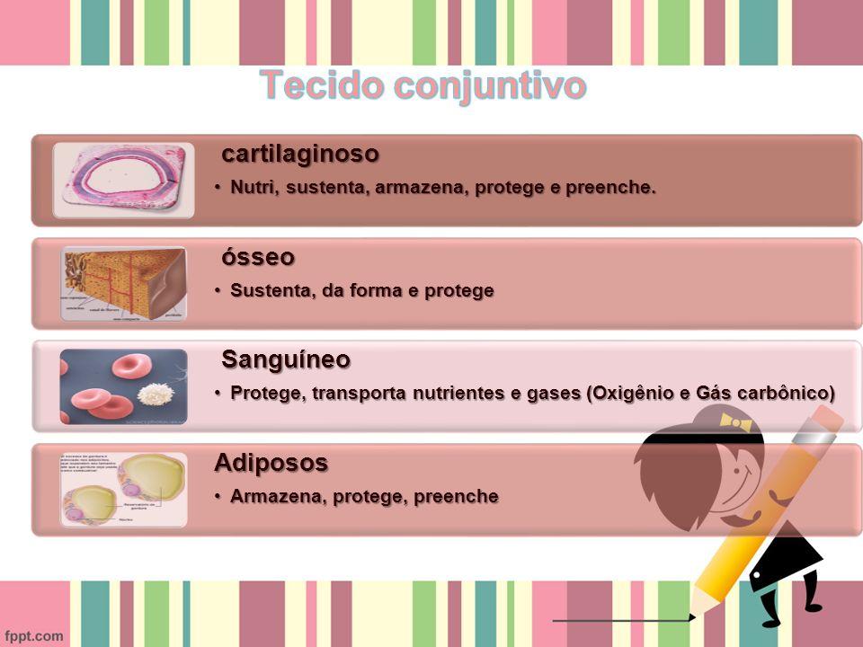 cartilaginoso cartilaginoso Nutri, sustenta, armazena, protege e preenche.Nutri, sustenta, armazena, protege e preenche.