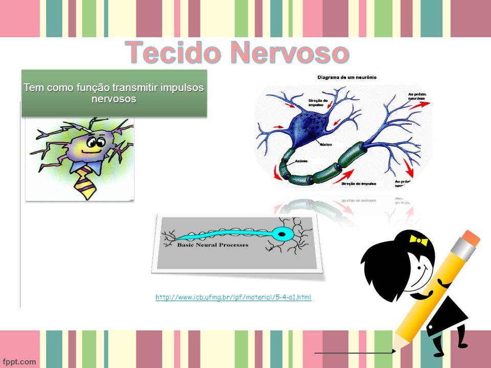 Tem como função transmitir impulsos nervosos http://www.icb.ufmg.br/lpf/material/5-4-a1.html
