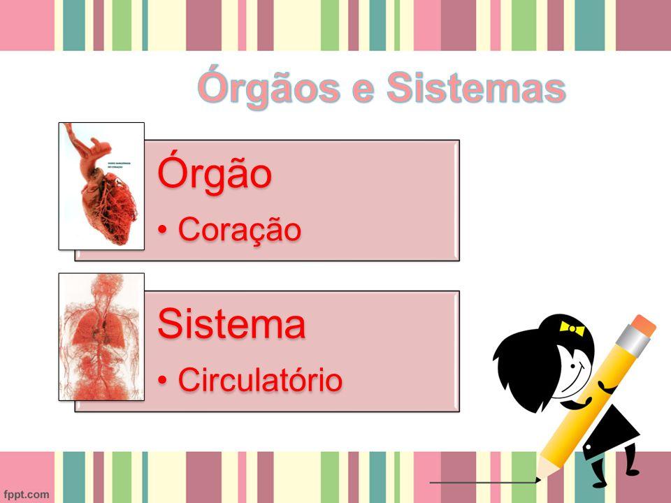 Órgão Coração Sistema Circulatório