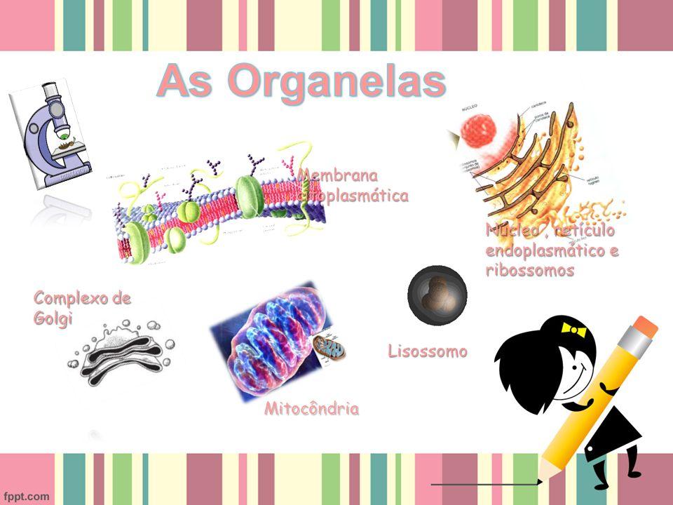 Membrana citoplasmática Núcleo, retículo endoplasmático e ribossomos Complexo de Golgi Mitocôndria Lisossomo