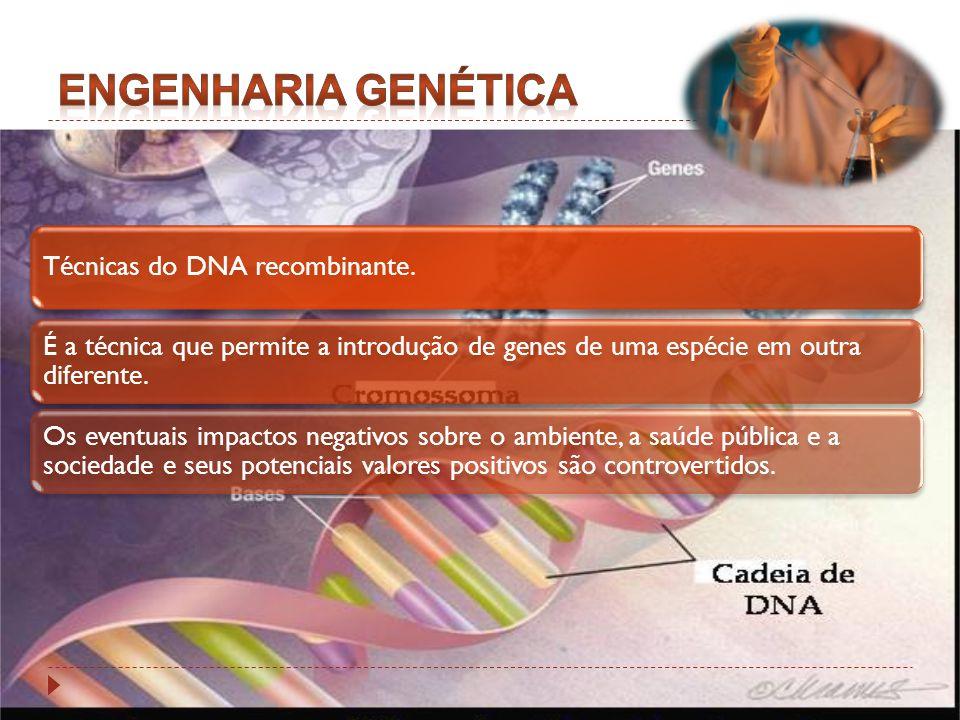 Técnicas do DNA recombinante. É a técnica que permite a introdução de genes de uma espécie em outra diferente. Os eventuais impactos negativos sobre o