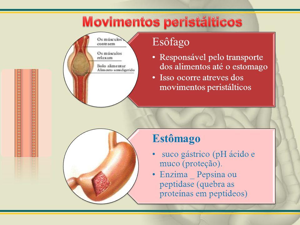 Esôfago Responsável pelo transporte dos alimentos até o estomago Isso ocorre atreves dos movimentos peristálticos Estômago suco gástrico (pH ácido e m