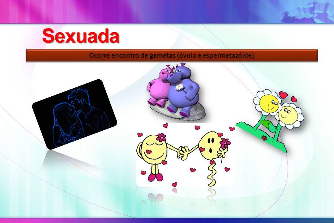 Sexuada Ocorre encontro de gametas (óvulo e espermetazóide)