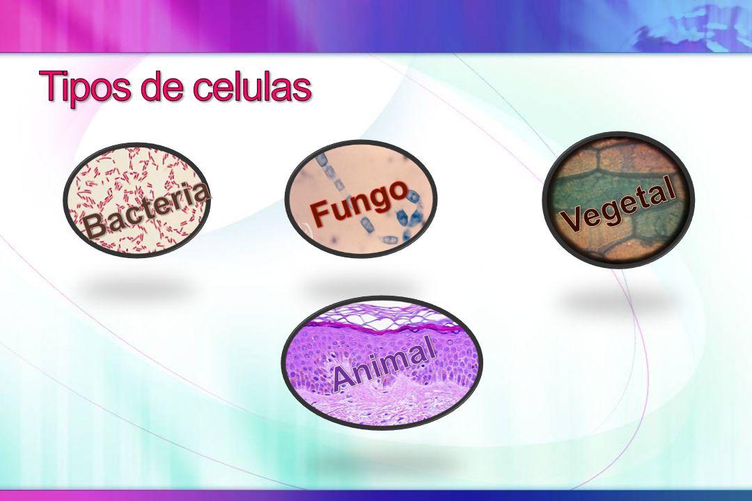 Membrana citoplasmática Citoplasma Ribossomos Material genético Componentes mínimos de uma célula